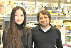 Postdoctoral fellow Qionger He, PhD (left), and Anis Contractor, PhD, associate professor in Physiology, recently published findings in the Journal of Neuroscience that could have significant implications on the study of fragile X syndrome and autism.