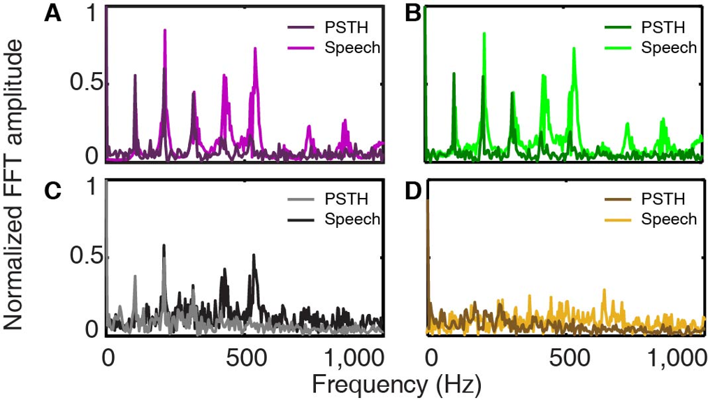 Phase Processing of Complex Sounds in the Auditory System
