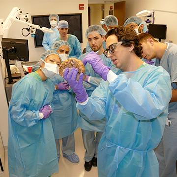 Research: Department of Neurological Surgery: Feinberg